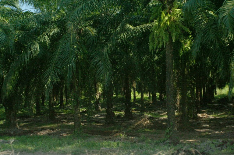 Noir de palmiers.jpg - big