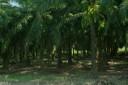 Noir de palmiers.jpg - thumbnail